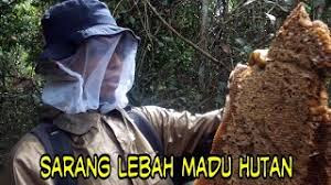 Jaminan 100℅ Madu Murni Ghassan2203 Asli Lebah Liar Hutan Bukan Ternak