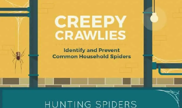 Creepy Crawlies identify and Prevent Common Household Spiders #infographic
