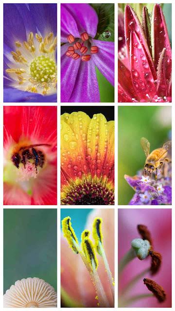 bees, flowers, nature, macro