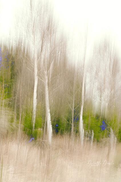 icm, textureblend, Dorothe Domke, art, photoart, Kunst, Fotokunst