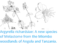 http://sciencythoughts.blogspot.co.uk/2017/08/argyrella-richardsiae-new-species-of.html