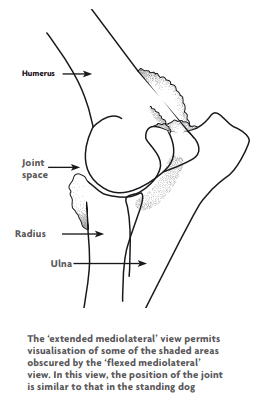 elbow dysplasia in dogs medical diagram