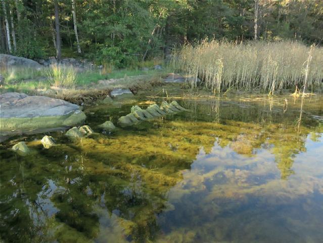 Metsäinen kallio- ja kiviranta, jonka vesirajasta pilkistää kalanruodon mallinen puuhylky, joka on osittain rihmalevän peitossa.