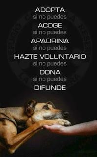 Cómo ayudar a los perros de la calle