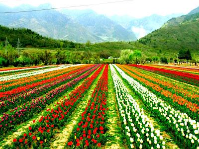 Indra Gandhi Memorial Tulip Garden