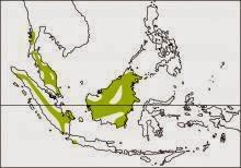 Javan yellownape Chrysophlegma mentale