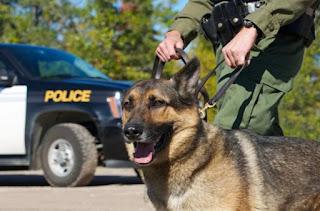 cães treinados para farejar drogas