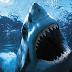 Cámara Oculta con Tiburón en el agua