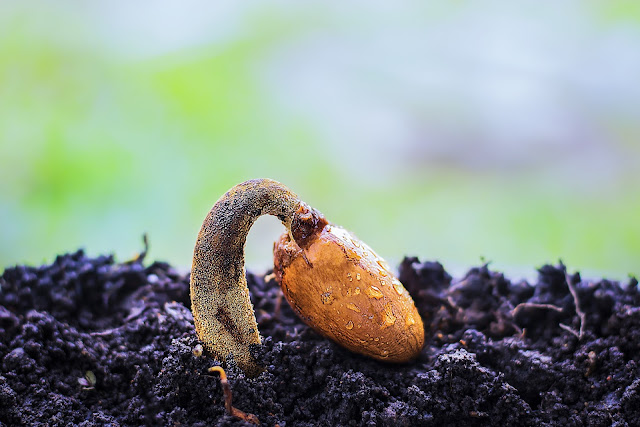 Organic-Seeds-for-Farming