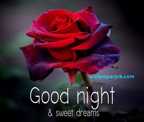good night images wallpaper download rose good night