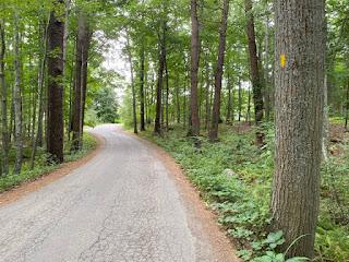 Little Harbor Loop trail on road