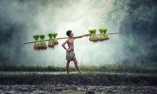 Rajiv Gandhi Kisan Nyay Yojana,Kisan Nyay Yojana,Benefit of input subsidy,Rs 10,000 per acre instead of Rs 9,000. Kodo-Kutki,Yojana 2021,