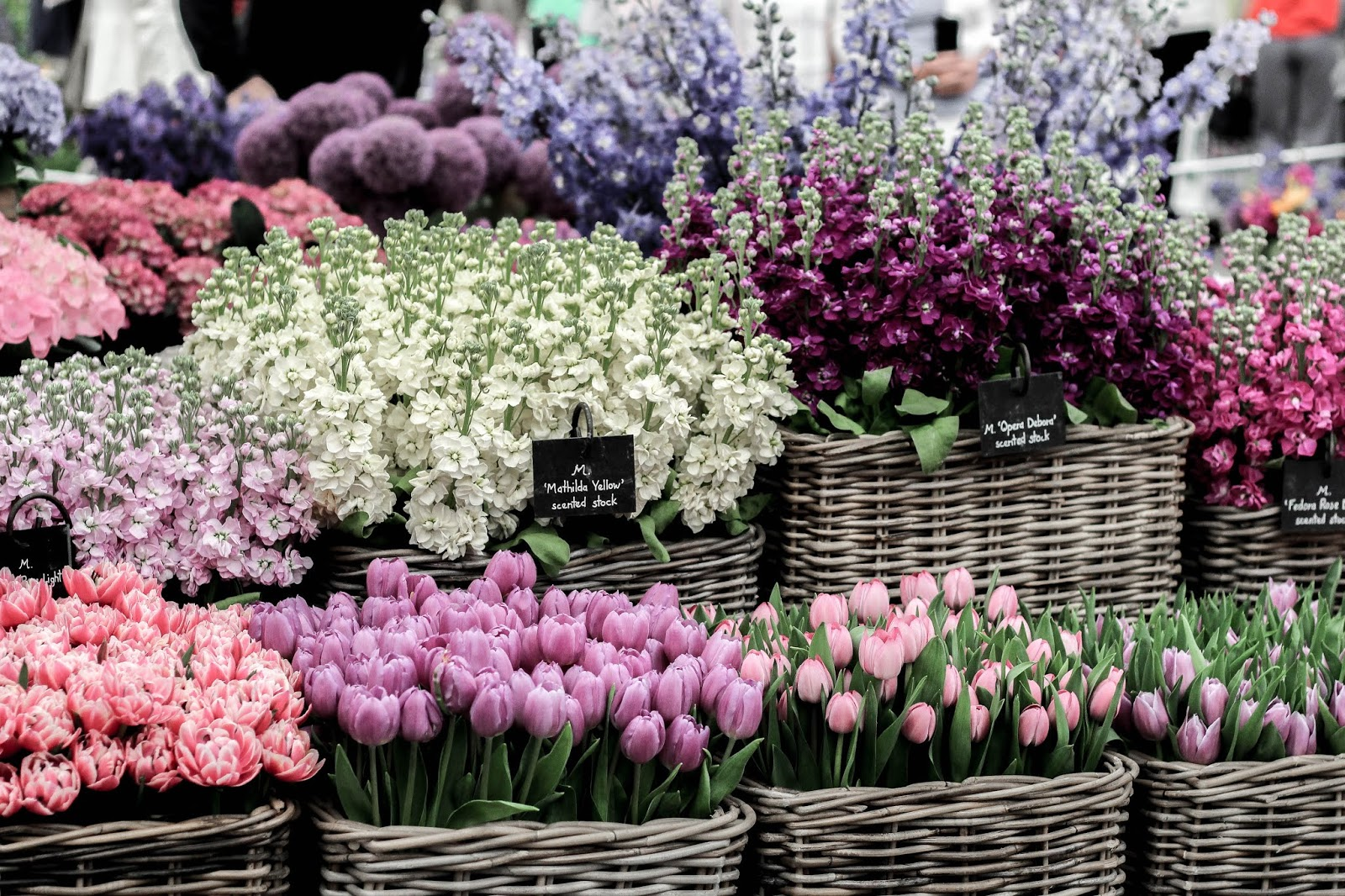 M&S Floral Market at Chelsea Flower Show 2018