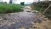 Nhà máy mía đường Việt Nam – Đài Loan tràn rỉ mật ra môi trường