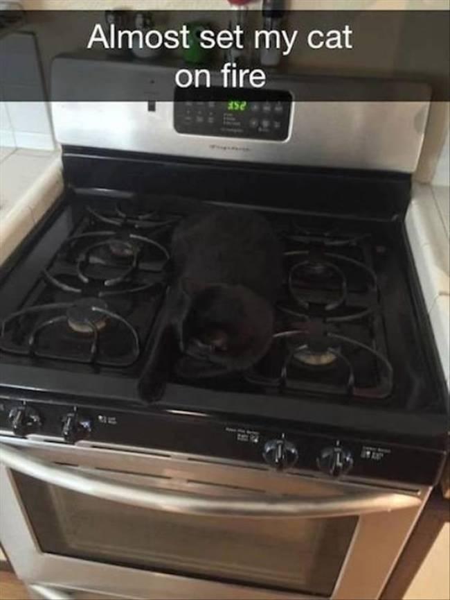 Hot kitten