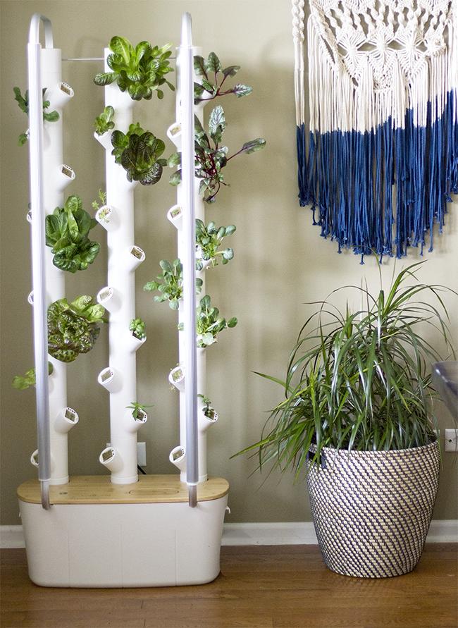 Gardyn Indoor Garden System