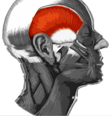 Imagen resaltada del músculo temporal