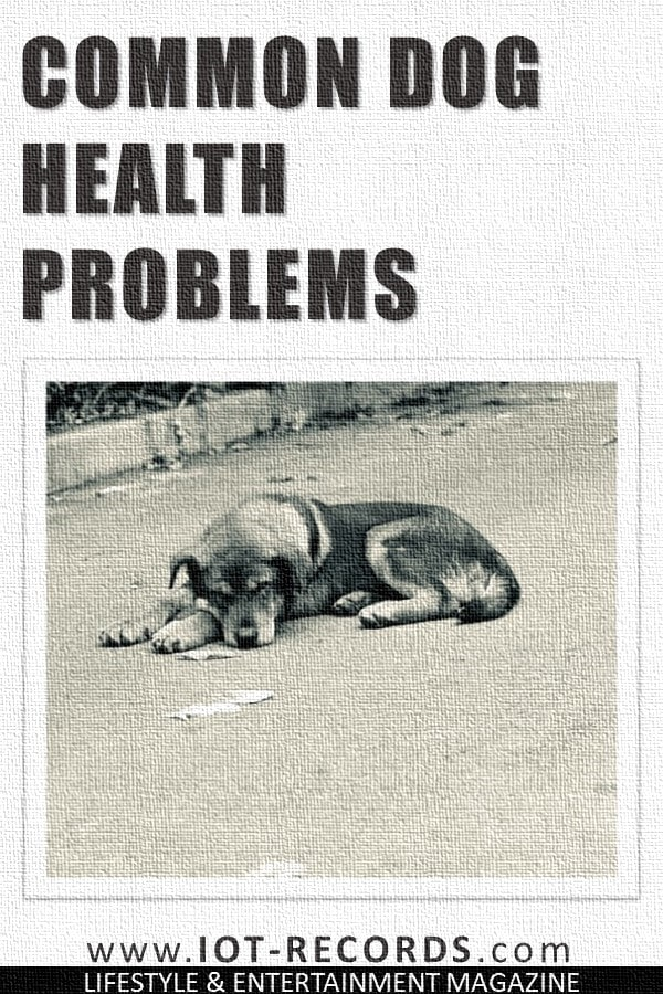 Common Dog Health Problems