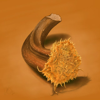 [Image: Pumpkin-Stem-Study.jpg]