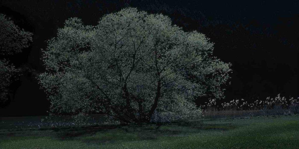 Night walk - Spring