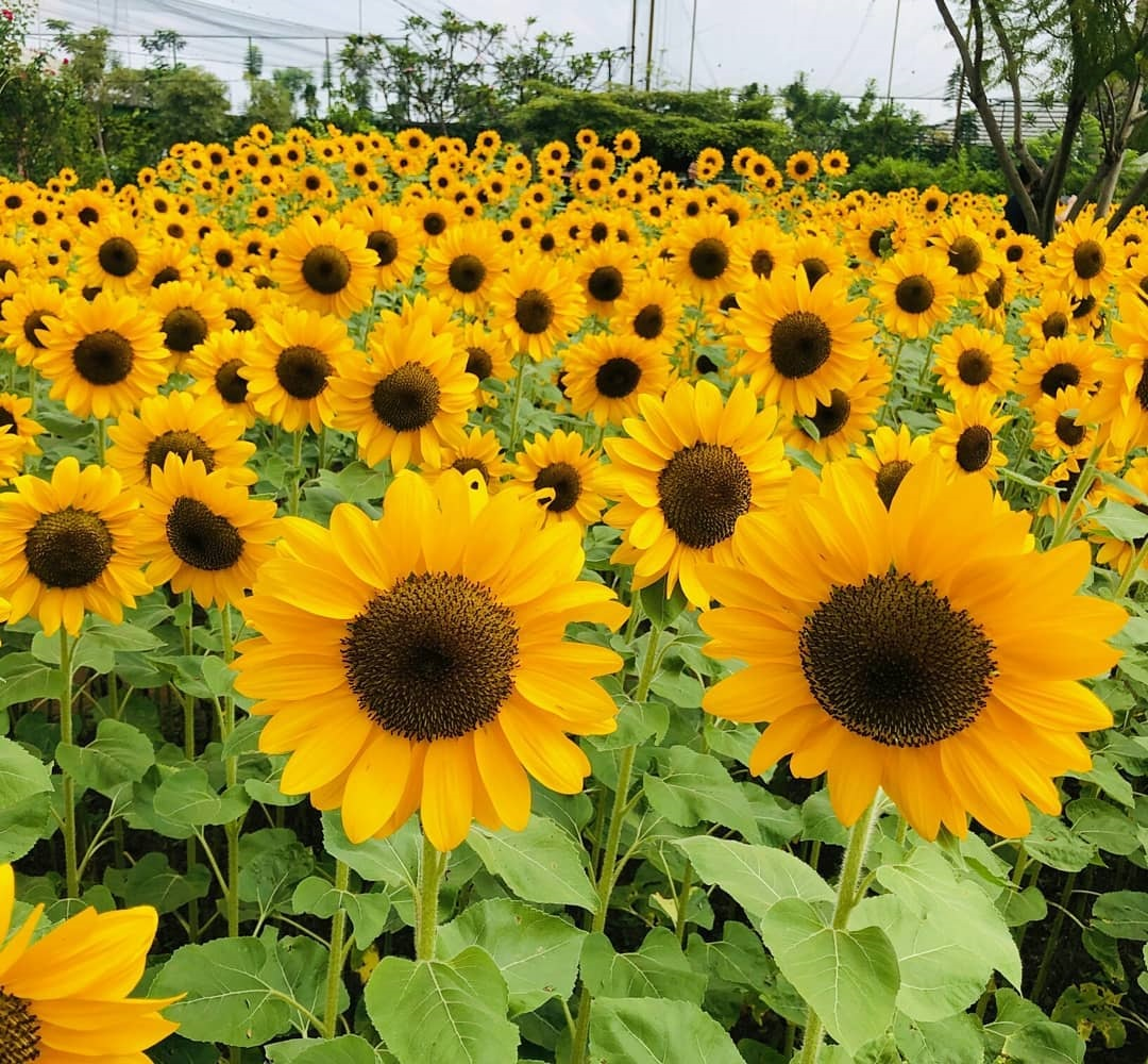 Tiket Masuk Sky Garden PVJ - Spot Foto Kebun Bungan ...