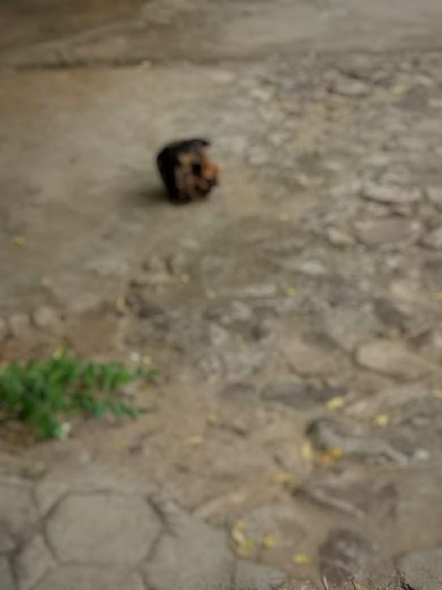 Mucambo: Cranio Humano é encontrado em Rua no centro da cidade.