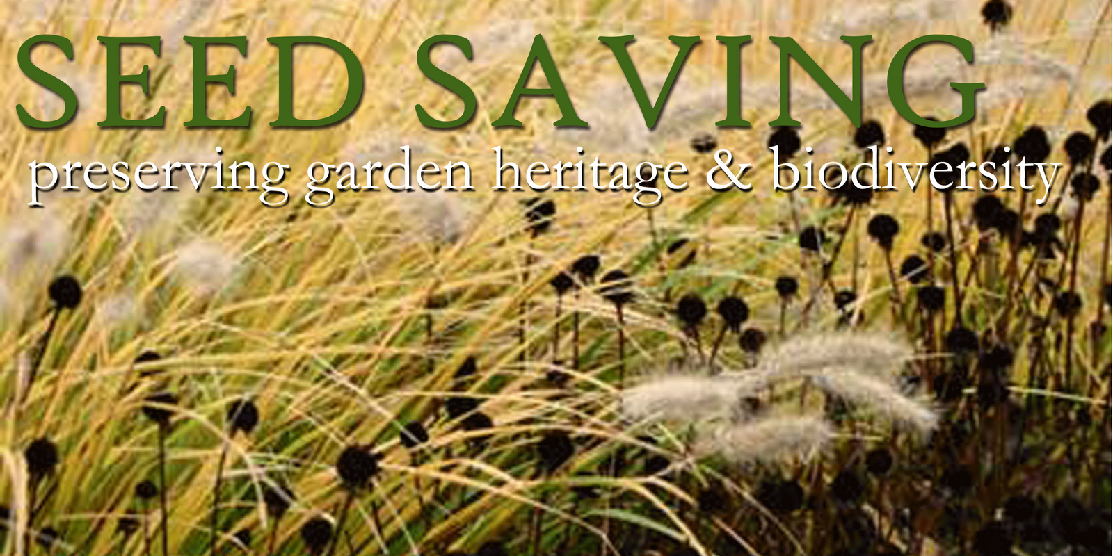 Historically, seed saving is something that every gardener did. Now, we are  more product oriented and less aware of the value associated with allowing  our ...