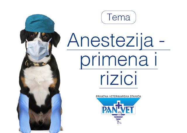 Anestezija u veterini, rizici i odlike