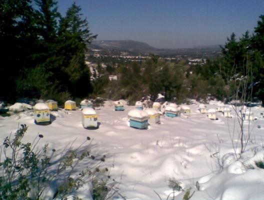 Μέλισσες του Κωνσταντίνου στον Τζιτζιφέ Χανίων τον χειμώνα