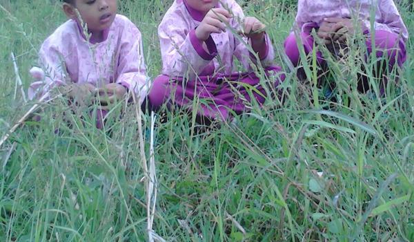 Mata Pelajaran Agribisnis Tanaman Pangan dan Holtikultura (3 Tahun)