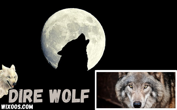 What is a Dire Wolf