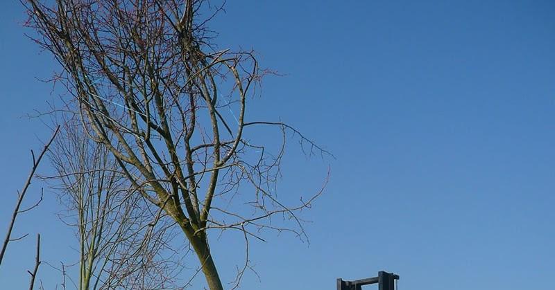 p pini re jardinerie vente d 39 arbre de grande taille. Black Bedroom Furniture Sets. Home Design Ideas