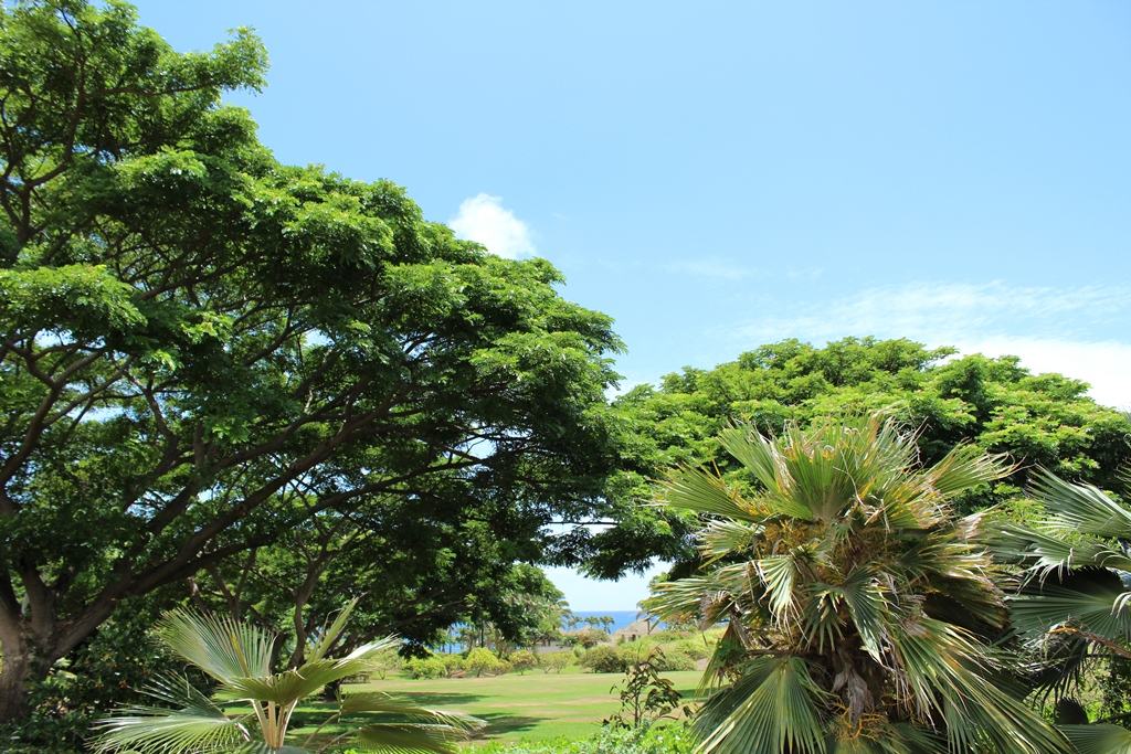 Doug 39 s photo site kauai national tropical botanical garden - National tropical botanical garden ...