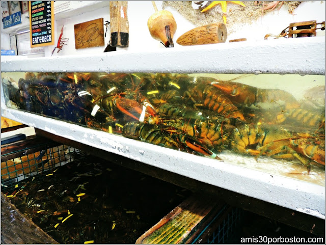 Lobster Shacks en Massachusetts:Langostas en el Roy Moore Lobster Company