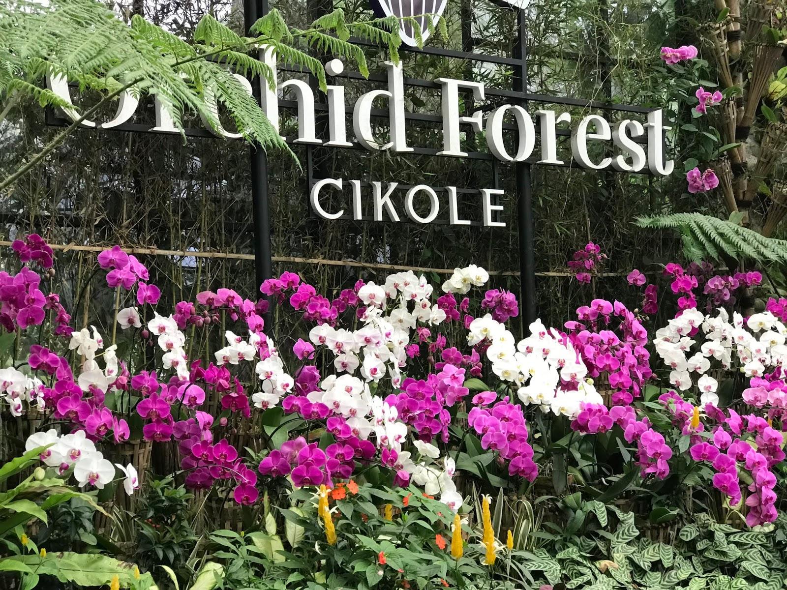 My Purple World Ww Orchid Forest Cikole