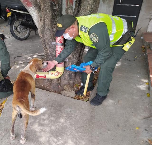 hoyennoticia.com, 22 comedores para perros  se construyeron por iniciativa de la Policía