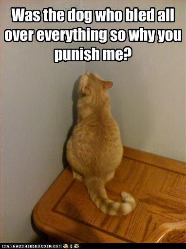 [Image: cat-is-in-trouble.jpg]