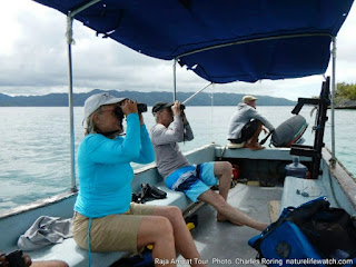 American visitors were birding with Charles Roring in Waigeo island