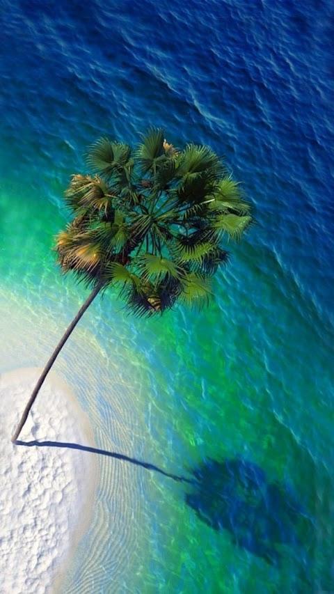 Cây cọ trên bãi biển