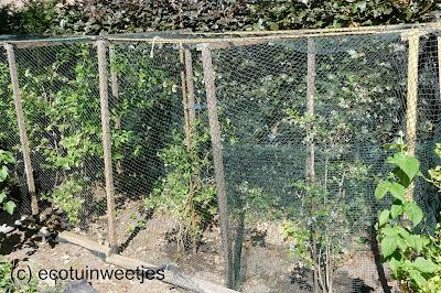Fruitkooi bescherming bessen tegen vogels