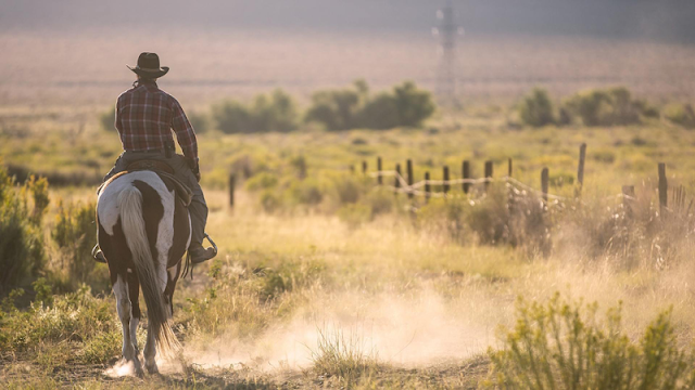 a lone horseback rider kicking up dust on the trail