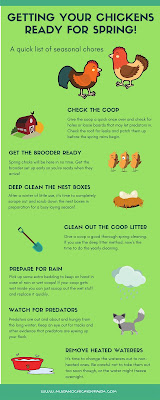Spring care for chickens | infographic