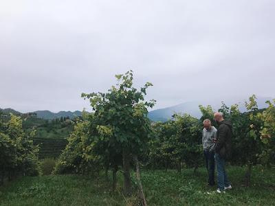 prosecco docg wine blogger