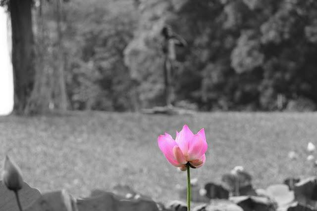 Mengenal Istilah Seletive Color Dalam Fotografi