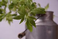 bisnis bibit tanaman, usaha bibit tanaman, cara bisnis bibit tanaman, cara usaha bibit tanaman, bibit tanaman, bibit tanaman menguntungkan, bibit tanaman laris, cara bisnis tanaman laris