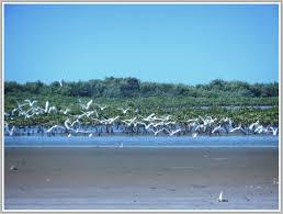 Tourisme, zone, hôtel, plage, visite, vacance, Saloum, pointe, Sangomar, Djiffer, parc, LEUKSENEGAL, Dakar, Sénégal, Afrique