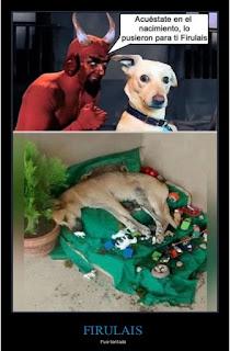 Perro Firulais se acuesta encima del Belén navideño