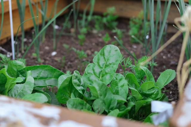Biodynamic agriculture