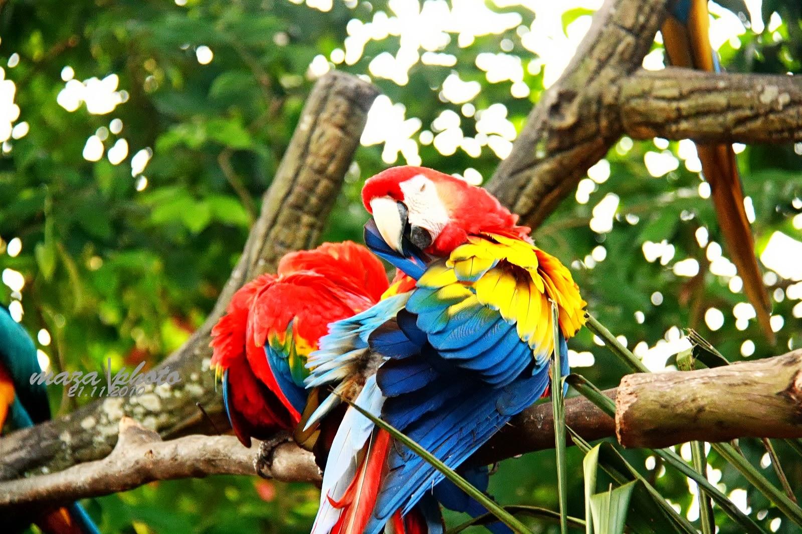 Gambar Burung Aneh Dan Lucu Hasil Manipulasi Photoshop Gambar