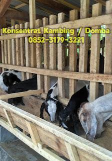 harga konsentrat kambing, harga pakan kambing, harga konsentrat domba